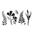 set with plants herbs and grasses painted ink for vector image