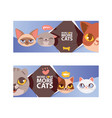 funny cat faces banner cartoon vector image vector image