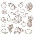 tropical farm and garden fruits sketch vector image vector image