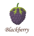 Blackberry vector image