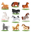 cartoon horse cute animal of horse-breeding vector image