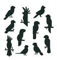 parrots birds black silhouette animal nature vector image