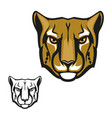 cheetah or guepard animal head mascot vector image vector image