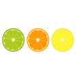 citrus fruit slices icon vector image vector image