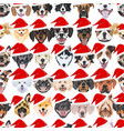 dogs seamless pattern merry christmas vector image vector image