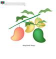 Fresh Mango A Famous Fruit in Bangladesh vector image vector image