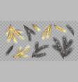 set fir branches vector image vector image