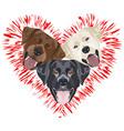 a heart for labrador vector image vector image