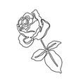 beautiful rose flower drawn vector image