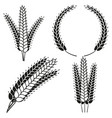 black and white ripe wheat ear silhouette set vector image