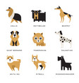 collection of different dogs breeds characters and vector image vector image