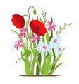 flowerbed flower red poppy set wild forest vector image vector image