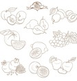 Set of Outline hand drawn fruits with leaves apple vector image vector image