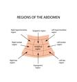 Abdominal Region on isolated