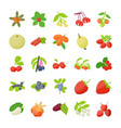 berry fruit icons pack vector image