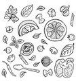 hand drawing vegetables herbs spices for pasta vector image