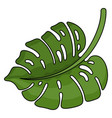 tropical green leaf beautiful jungle big foliage vector image