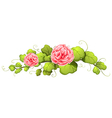 A plant with carnation pink flowers vector image vector image