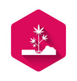 white planting marijuana or cannabis plant in the vector image vector image