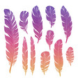 colorful birds feather vector image vector image