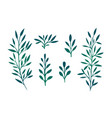set of branches with leaves and herbs for design vector image