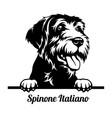 spinone italiano peeking dog - head isolated vector image vector image