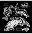 yellow pearsh sturgeon and atlantic salmon vector image vector image