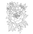 bouquet various flowers and peonies for vector image