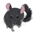 cartoon of cute chinchilla vector image vector image
