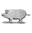 pig preview vector image vector image