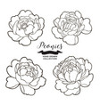 peony flowers outlines hand drawn flowers vector image