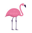 cartoon pink flamingo on white background vector image vector image