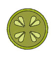 cucumber slice isolated icon vector image vector image