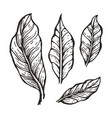 coffee tree leaves sketch vector image