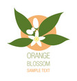 orange blossom flowers with buds and leaves vector image vector image