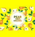 pear fruit colorful circle copy space organic over vector image vector image