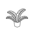 potted palm leaves plants line style icon vector image vector image