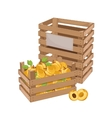 Wooden box full of apricot isolated vector image vector image