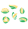 Symbols of cereal plants vector image