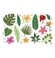 summer set of tropical leaves vector image