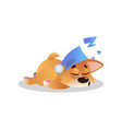 sweetly sleeping corgi in cute blue hat with vector image