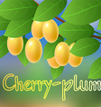 Yellow juicy ripe sweet cherry plum hanging on a vector image vector image