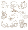 Set of Outline hand drawn fruits with leaves vector image