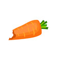 bright orange bitten carrot natural and healthy vector image
