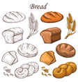 line and colored bakery elements loaf of vector image vector image