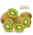 realistic kiwi isolated on white vector image