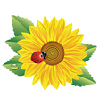 sunflower and red ladybird vector image vector image