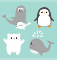 arctic polar animal icon set white bear penguin vector image vector image