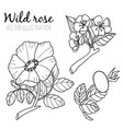 black and white line dog rose vector image vector image