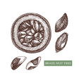 brazil nut tree hand drawn food drawing vector image vector image